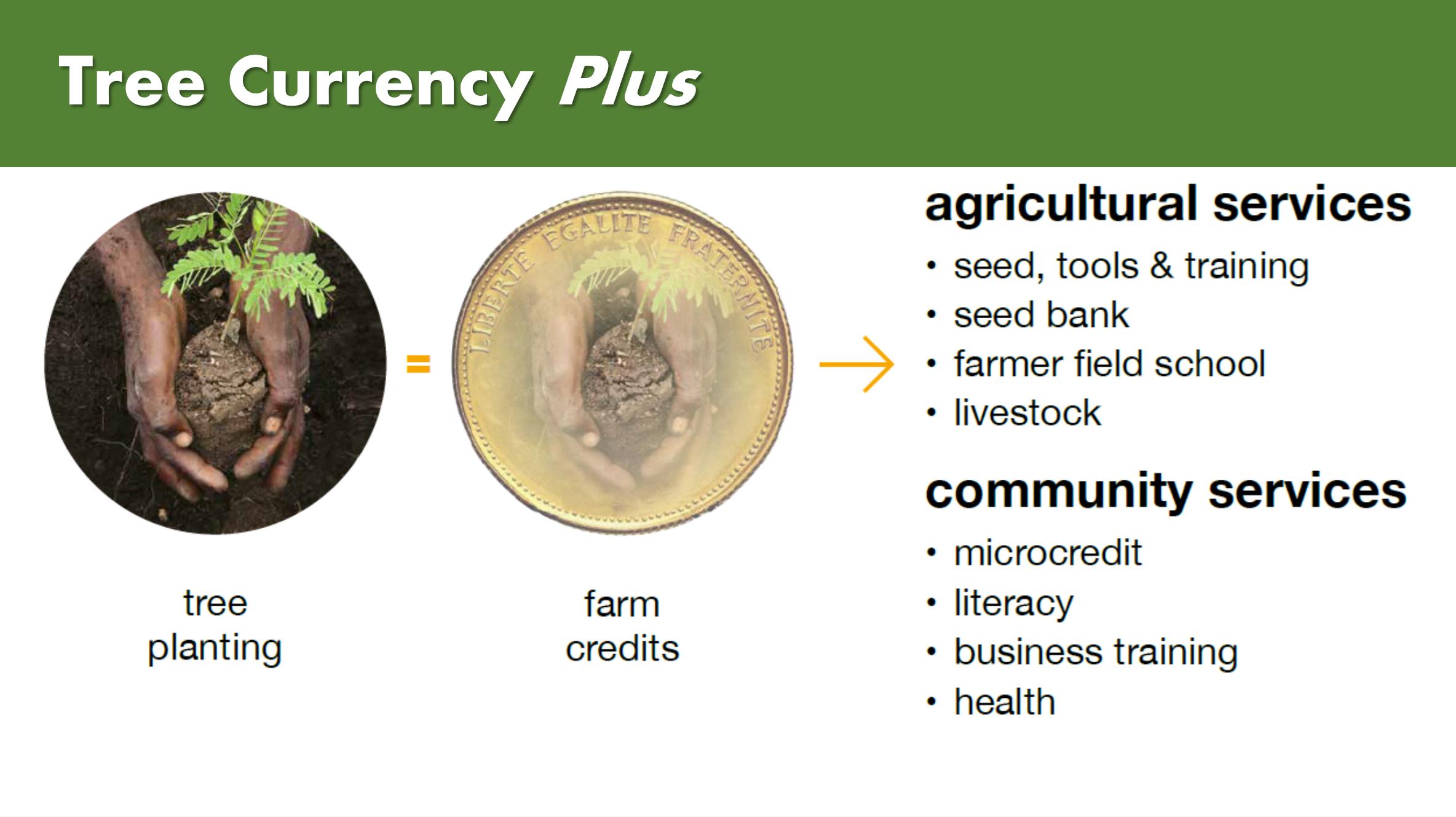 Tree Currency Model 'Plus'