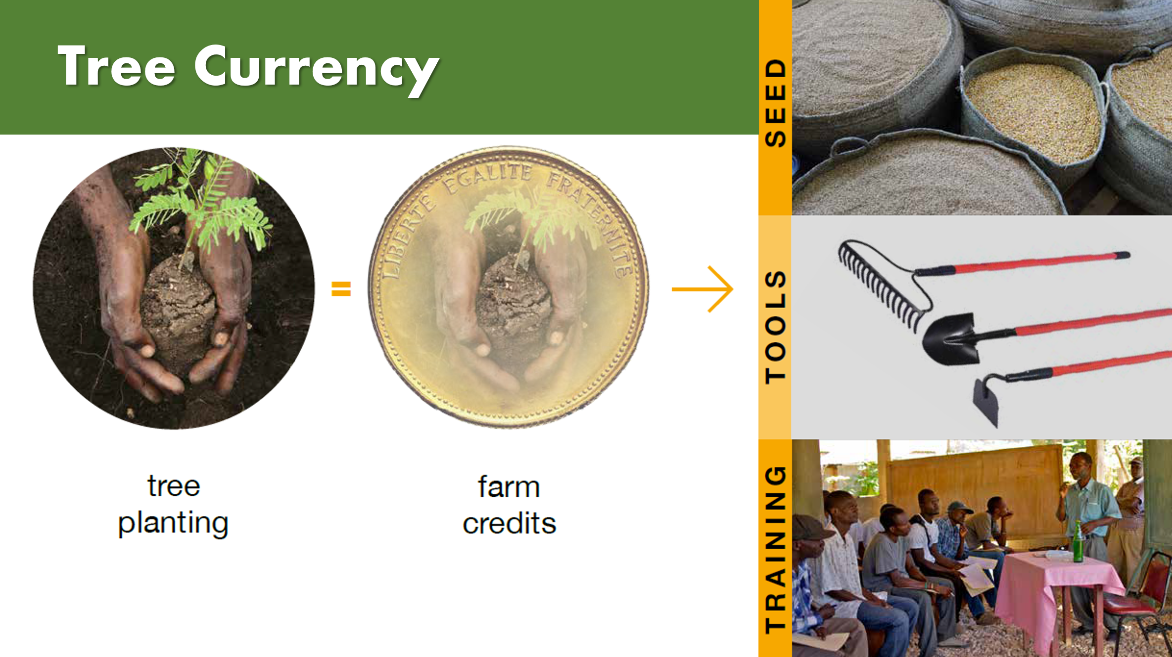 Tree Currency Model