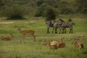 Gabriela in Africa